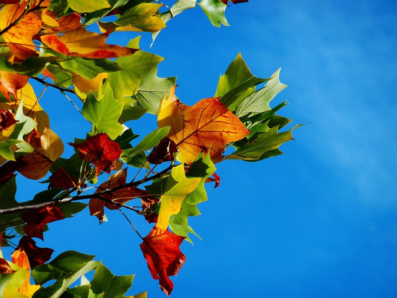 autumn-974882_1920